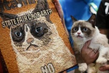1 cat gal082813