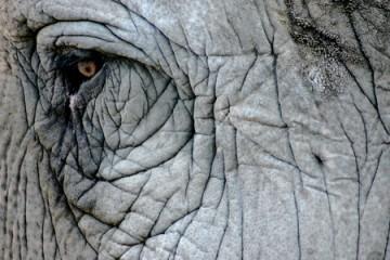 2009-09-19-elephant