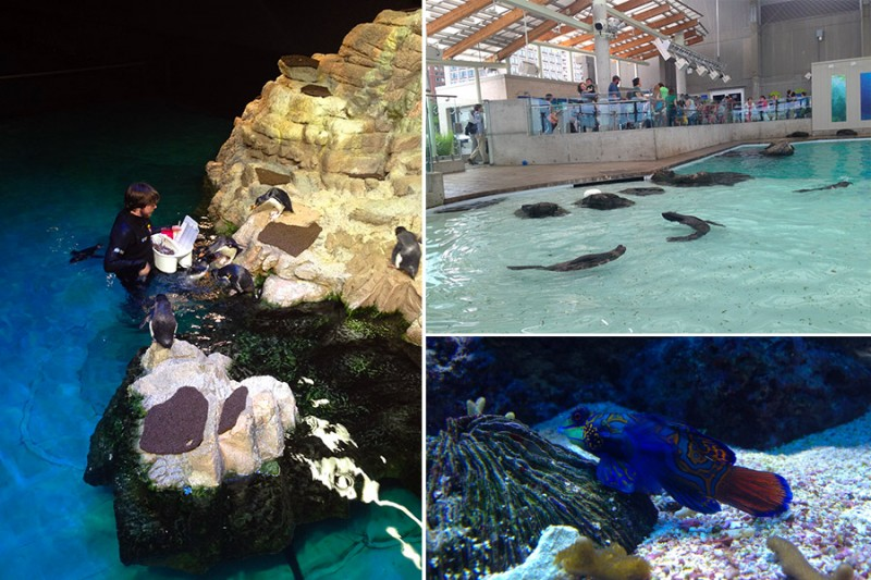Visiting New England Aquarium Hunting For Wild Whales