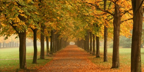 Autumn Leaves in the Park Near Dresden, Germany