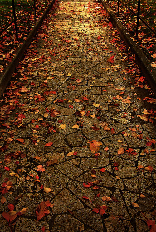 http://www.vagabondish.com/wp-content/uploads/autumn-leaves-rome.jpg