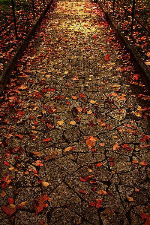 Autumn Leaves, Rome