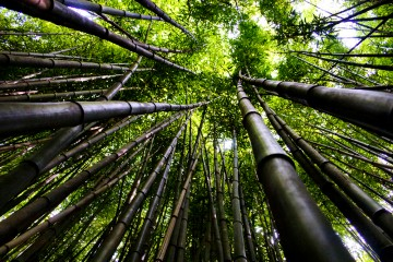Bamboo Forest at the Nature Center in Chattanooga, Tennessee