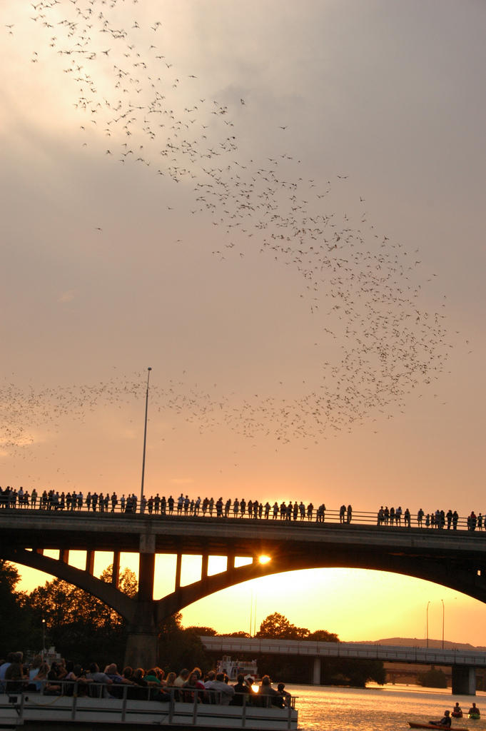 Bats Over Congress Street Bridge, Austin, Texas