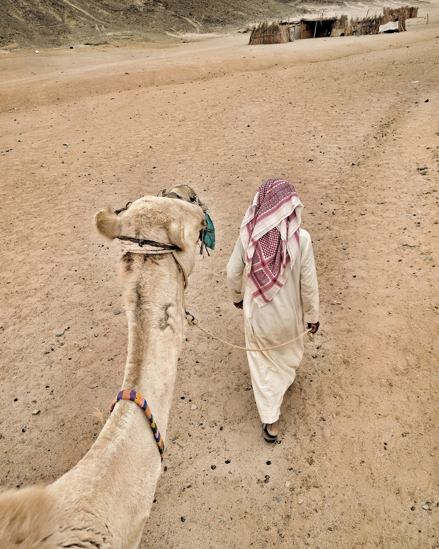 Bedouin leading a camel ride in the desert outside Hurghada, Egypt