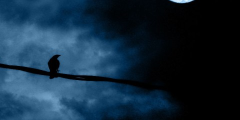 Bird in Silhouette Against Moon