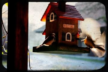 birdhouse-3071079595