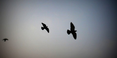 Birds flying against sky