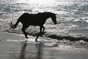Black Horse of Buccoo Beach, Tobago