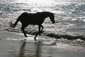 Black Horse of Buccoo Beach, Tobago