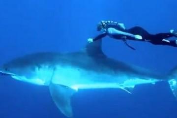 blond-and-great-white-shark-video-screenshot
