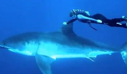 blond-and-great-white-shark-video-screenshot