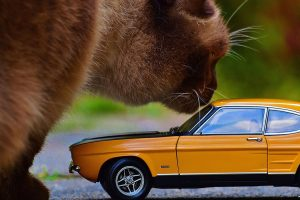 Cat with a model car