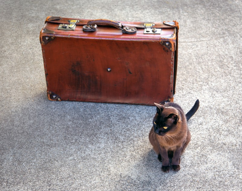 Cat standing next to antique suitcase