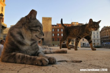 cats Rome