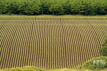 Symmetrical landscape of Gervais, Oregon