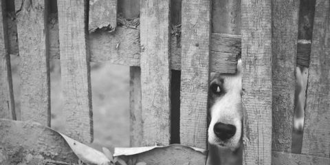 Dog with his nose through a fence