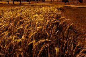 A Dark Field