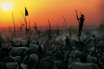 Dinka Herds - Majestic Lyre Shaped Horns