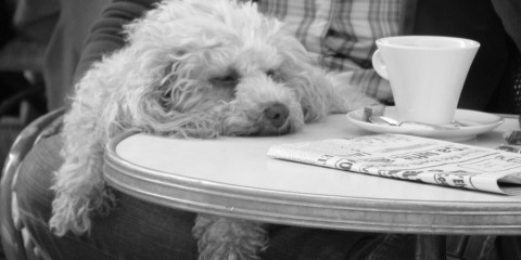 Dog sleeping on table at cafe in France