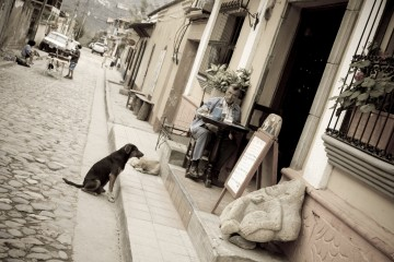 Dog waiting outside cafe in Santa Rosa de Copan, Honduras