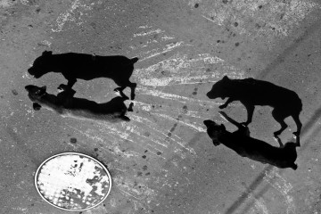 Two dogs in silhouette in Bolivia, South America