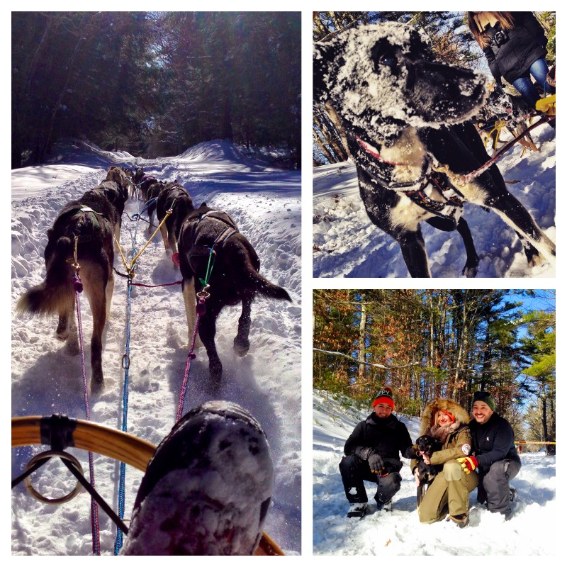 Dogsledding at Rutland State Park in Massachusetts