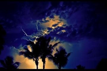 Two palm trees in thunder storm in Providencales, Turks & Caicos