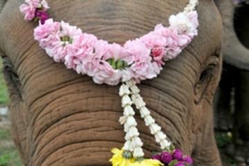 elephant polo WSJ