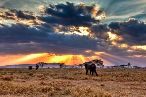 Elephants in Serengeti National Park (Tanzania)