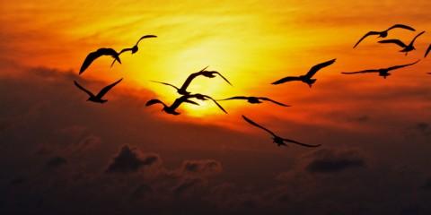 Feeding the Birds on South Padre Island, Texas
