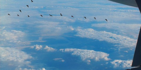 Flock of birds viewed from airplane window