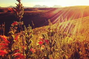 Sunlight Shines Through the Delicate Flora at Gondwana Game Reserve, South Africa