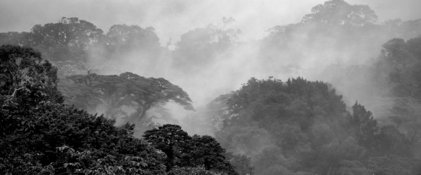 Fog over the rainforest in Costa Rica