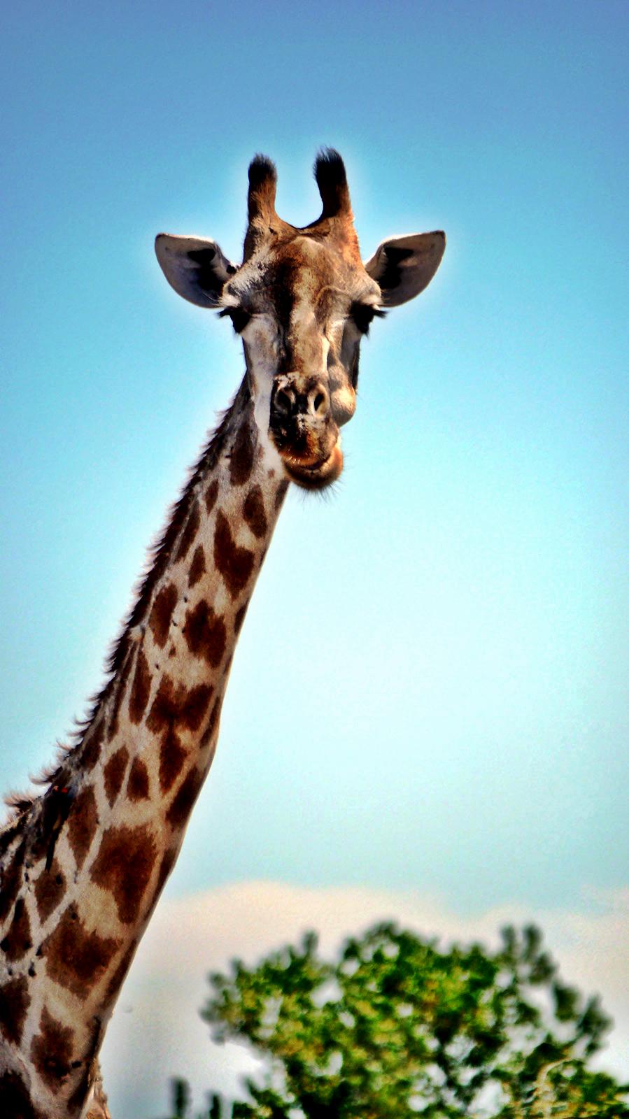 Safari In Va >> Visions of Botswana: On Safari Along Africa's Chobe River [Gallery] - Vagabondish