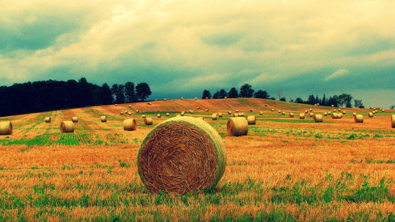 Hay Bales, Alliston, Ontario, Canada (near Toronto)