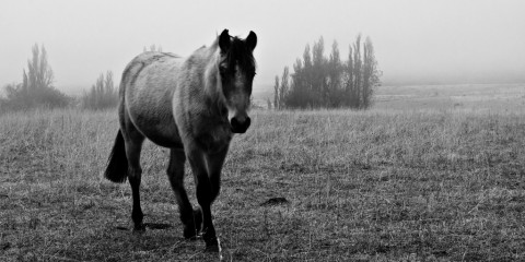 Horse in field in Aysen, Chile (Patagonia)