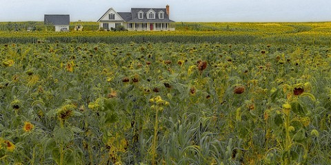House in a Field of Flowers, Delaware
