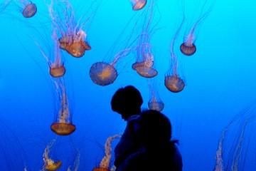 People observing jellyfish swarm at aquarium in Monterey, California