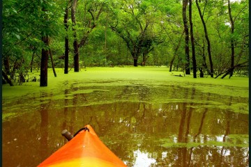Kayaking green swamp in Oklahoma