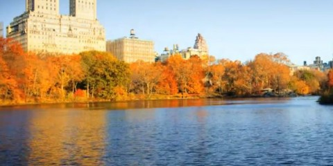 leaves-change-autumn-central-park-nyc-video-snapshot