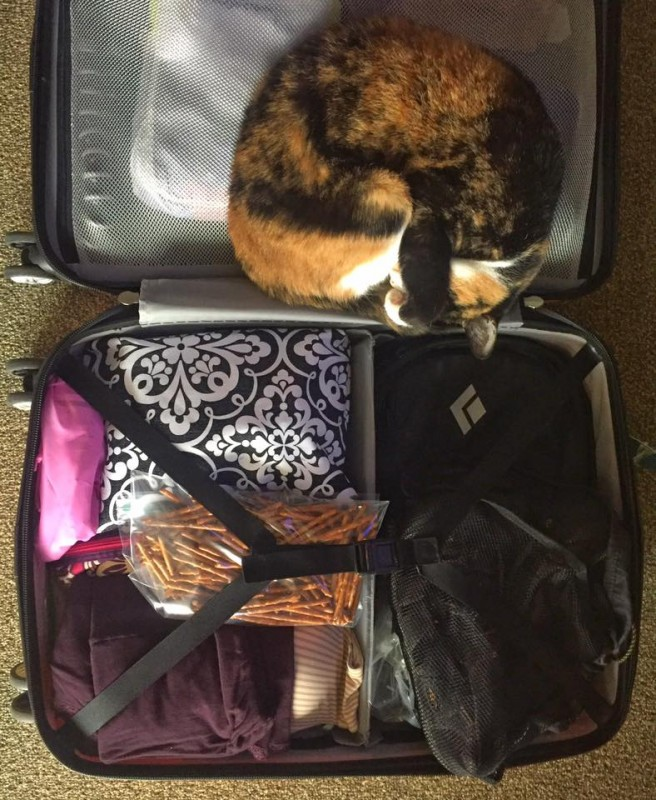 Cat sleeping in a suitcase