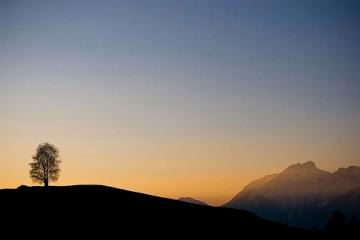 Single Tree on Hilltop in Tyrol, Austria