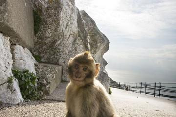 Angelic Monkey, Gibraltar