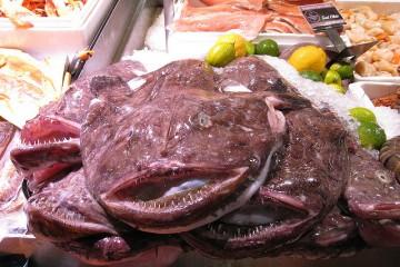 Monkfish on Ice at Fish Market