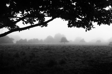 Morning Fog Emerges, France