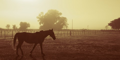 Horse in Morning Fog, Buenos Aires, Argentina