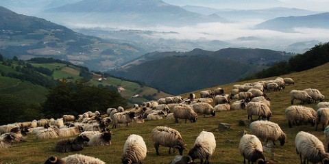 Sheep grazing on a mountain side near Camino de Santiago