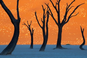 Photo from Namibia park that looks like a painting