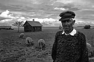 Old Man and His Sheep, Estonia